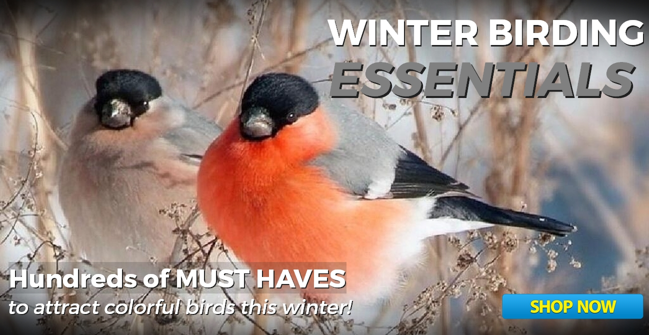 Winter Birding Essentials - Bird Feeders, Bird Houses, Bird Baths