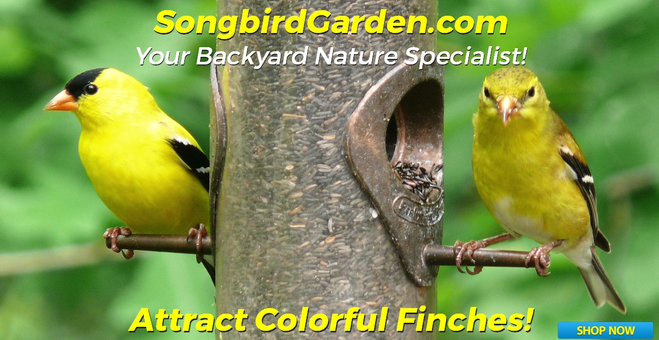 Attract Goldfinches-Thistle/Nyjer Tubular Bird Feeders