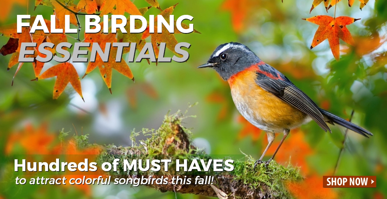 Fall Birding Essentials - Bird Feeders, Bird Houses, Bird Baths
