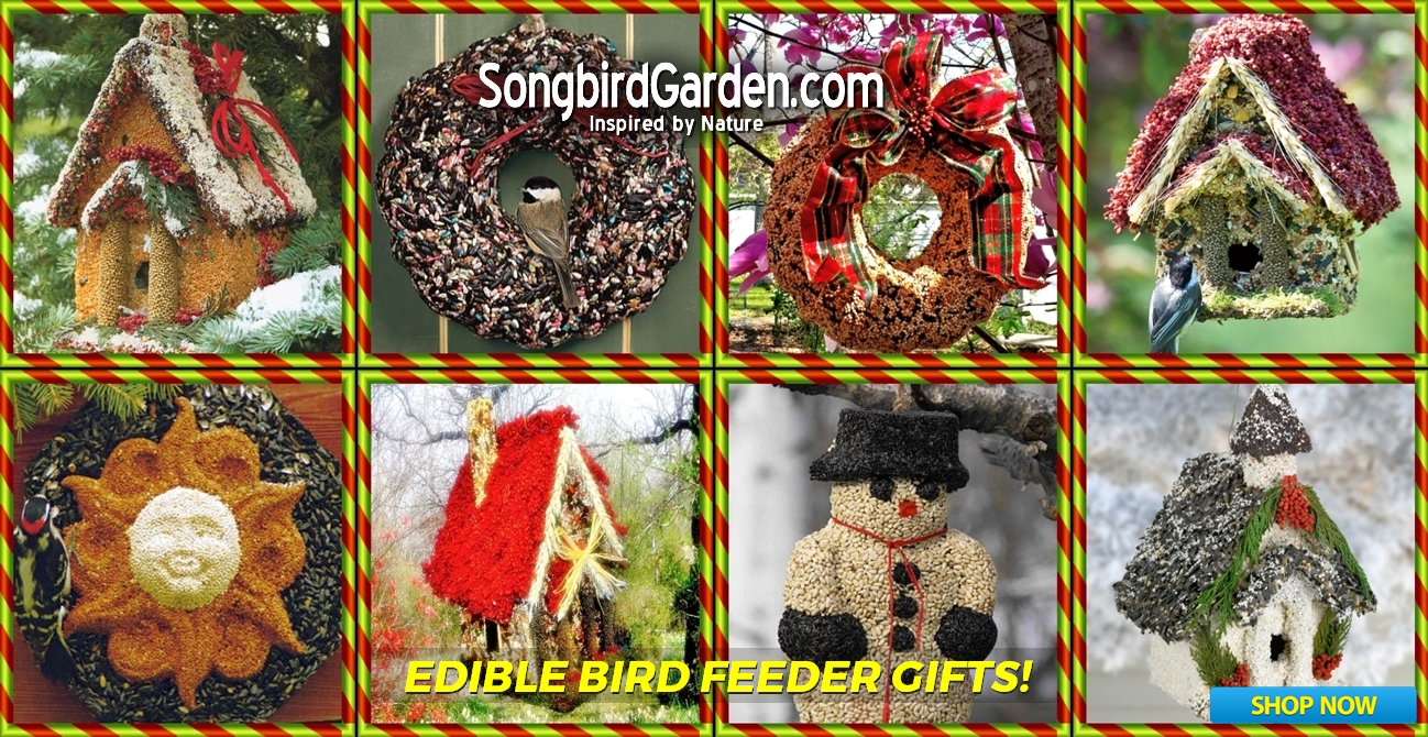Edible Bid Feeders - Birdhouses, Wreaths, Ornaments