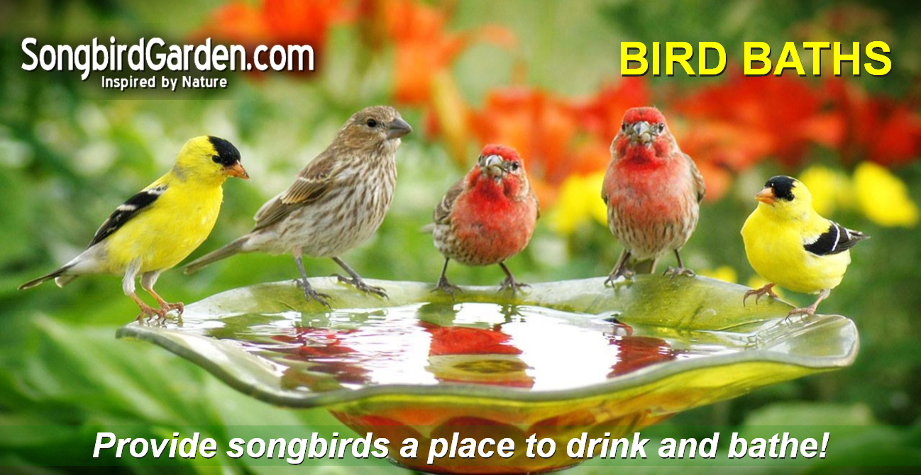 Bird Baths & Accessories