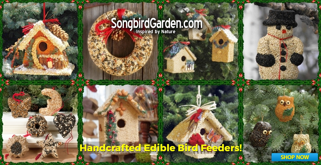 Edible Bird Feeders