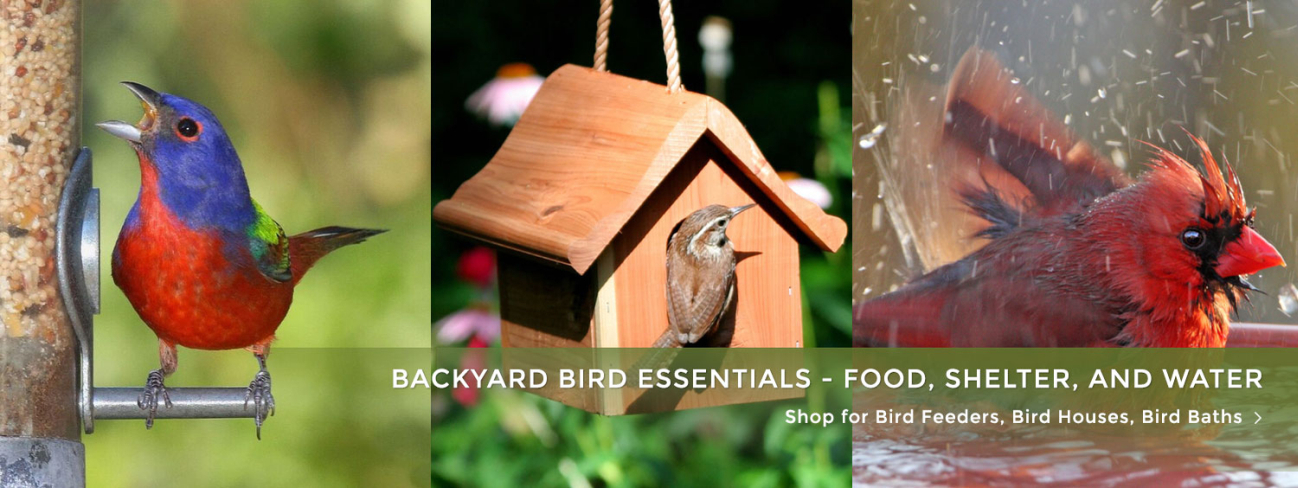 Wild Bird Care - Bird Feeders, Bird Houses, Bird Baths