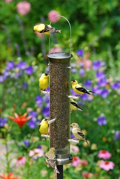 Songbird Garden Choosing A Bird Feeder Selecting A