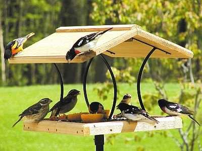 Bird Feeder Trays Feeder w Removable Tray