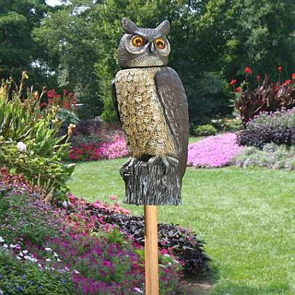 Rotating Head Owl Natural Enemy Garden Scarecrow