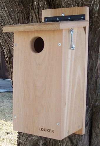 Woodpecker Houses  Flicker Houses  Nest Boxes For Woodpeckers    Golden Fronted Woodpecker House