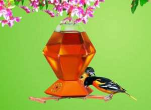 oriole bird feeders for feeding and attracting orioles to your yard
