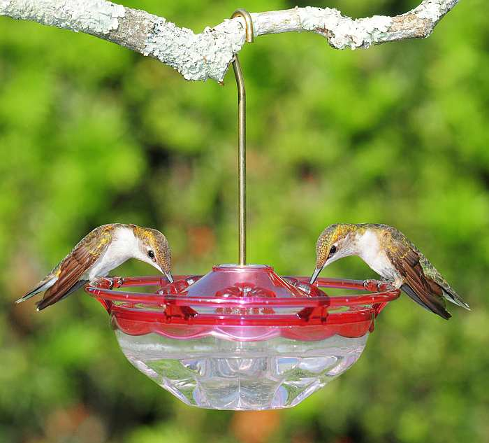 HummBlossom Hummingbird Feeder 4 oz. Rose