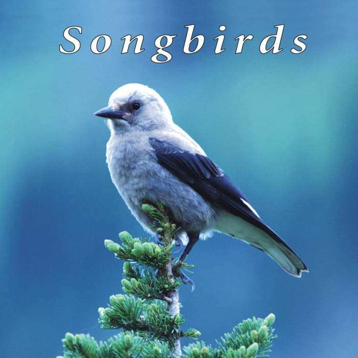 Naturescapes Music CD Songbirds