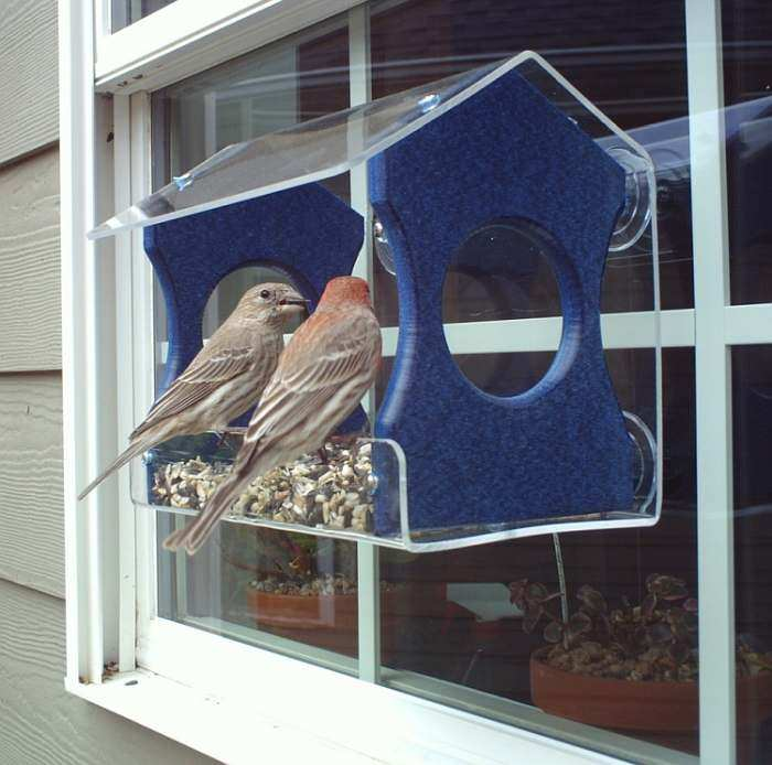 Songbird Recycled Poly Window Feeder Medium Blue