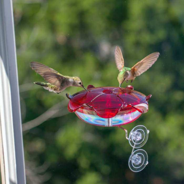 Droll Yankees Ruby Sipper Window Hummer Feeder
