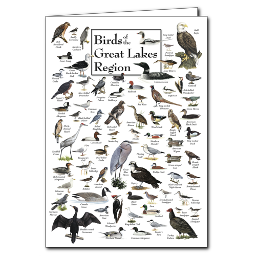 Birds of Great Lakes Greeting Cards Set of 6