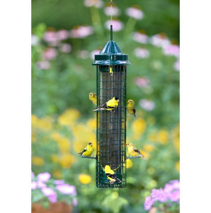 Squirrel Buster Squirrel Proof Finch Feeder