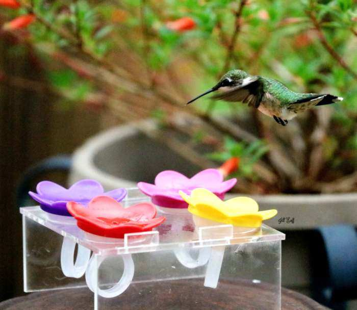 Hummer Ring™ Hummingbird Feeder Trainer with Rings