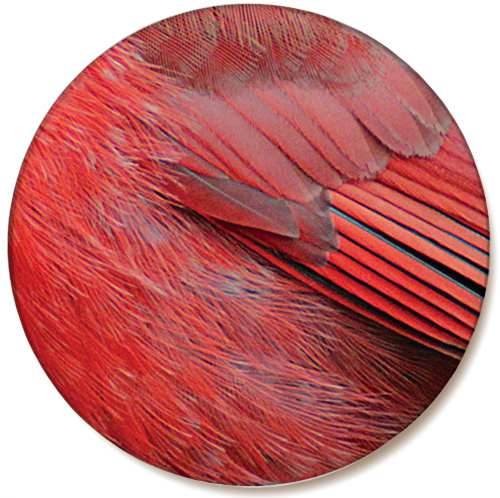 Audubon Feather Ceramic Coaster Cardinal 4/Pack