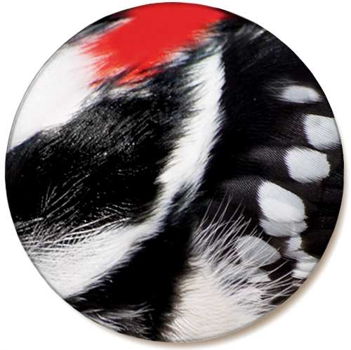 Audubon Feather Ceramic Coaster Woodpecker 4/Pack