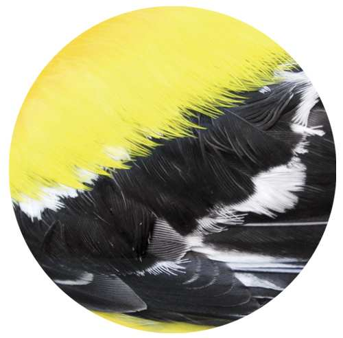 Audubon Feather Ceramic Coaster Goldfinch 4/Pack