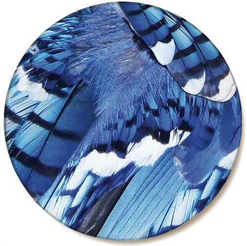 Audubon Feather Ceramic Coaster Blue Jay 4/Pack