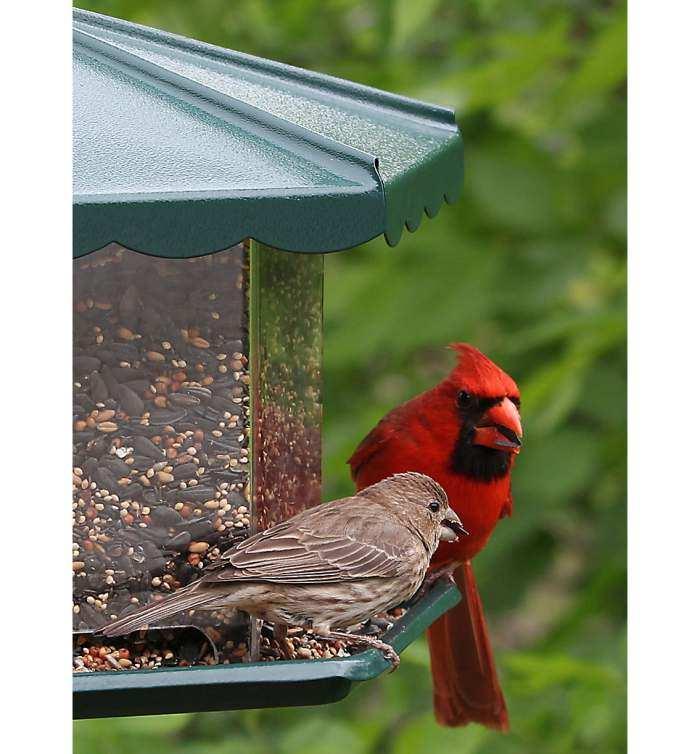 Mini Triple Bin Party Bird Feeder Green Multi Seed Bird Feeder Quality Handcrafted Bird Feeders At Songbird Garden