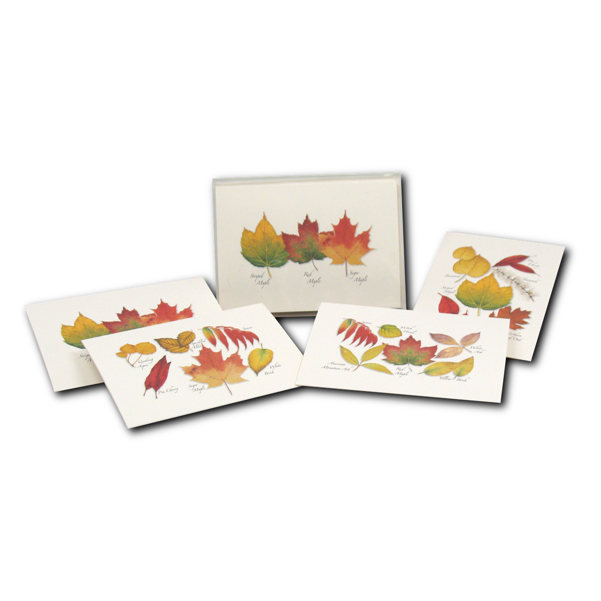 Boxed Notecard Assortment Fall Foliage Set of 8