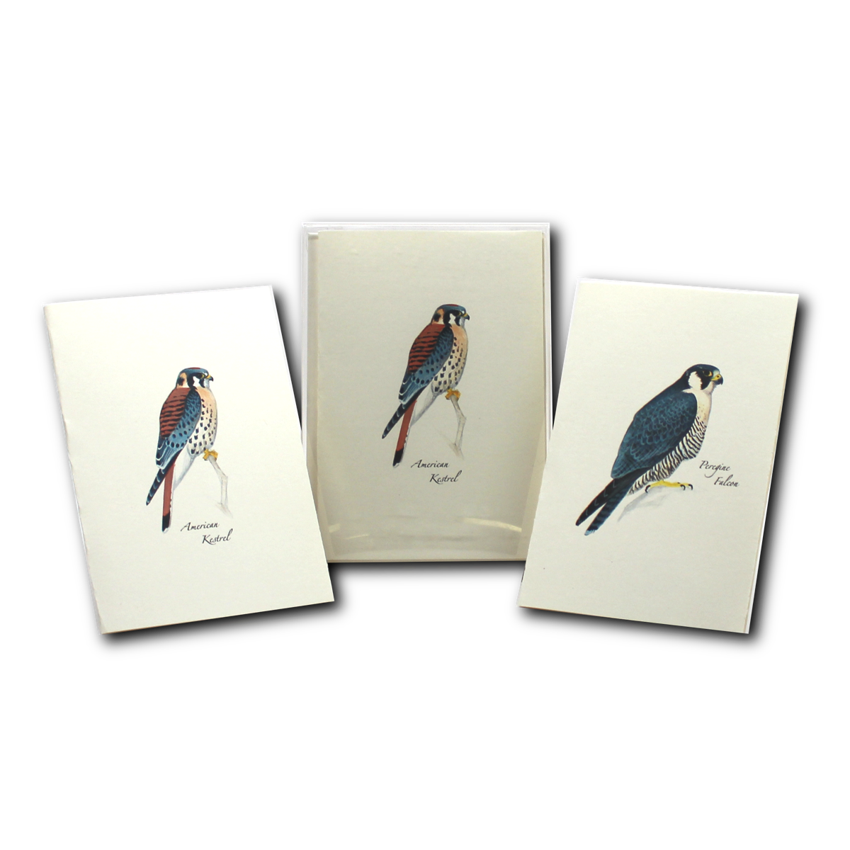 Boxed Notecard Assortment Sibley Raptor Set of 8