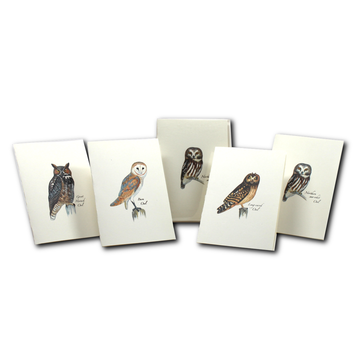 Boxed Notecard Assortment Sibley Owl Set of 8