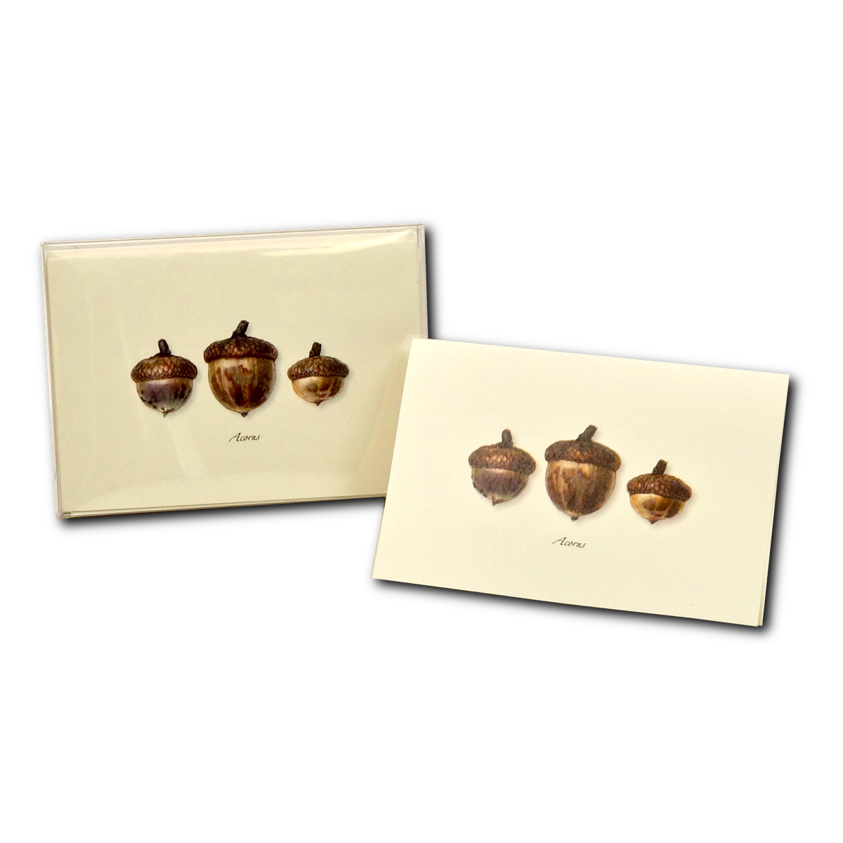 Boxed Notecard Assortment Three Acorns Set of 8