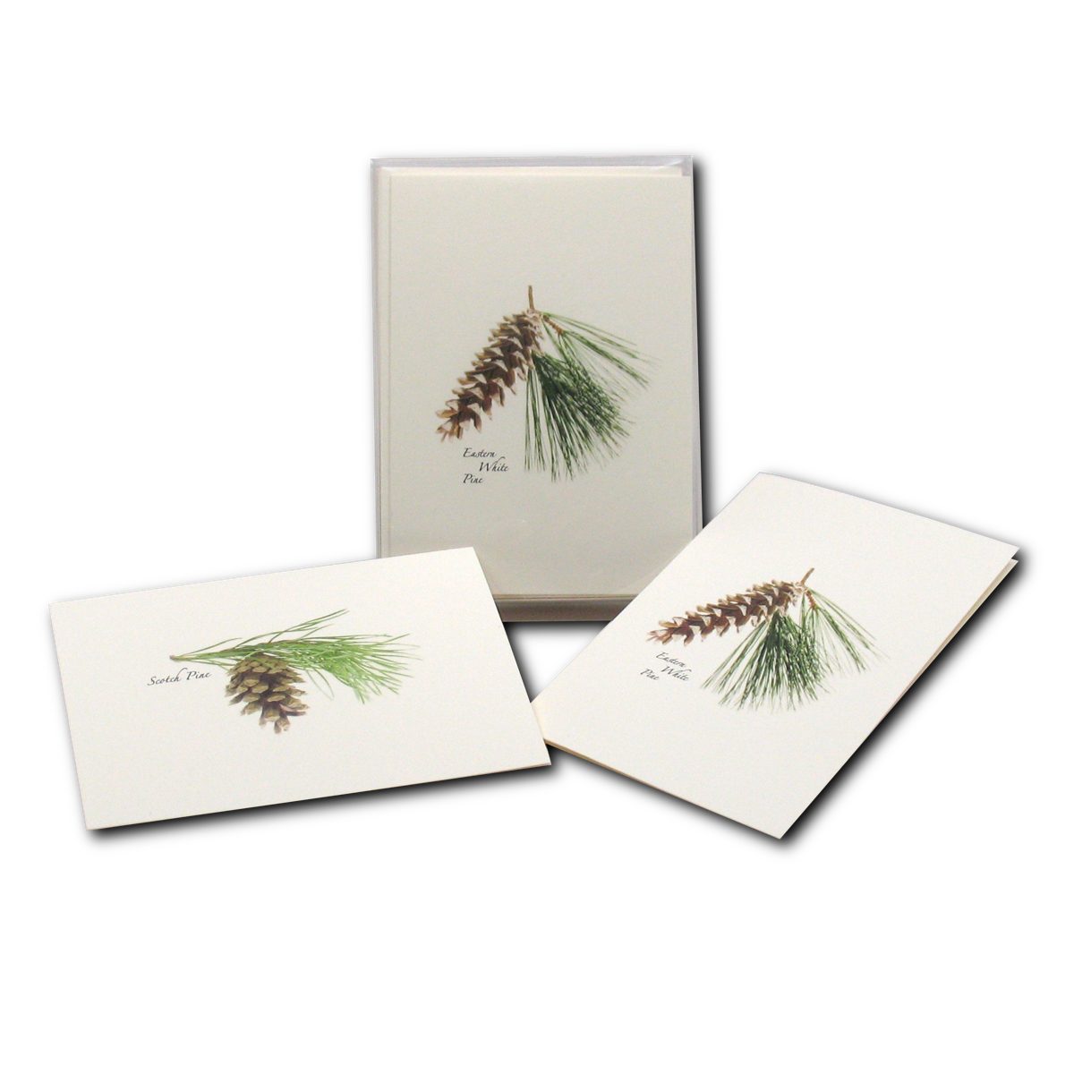 Boxed Notecard Assortment Pinecone Set of 8