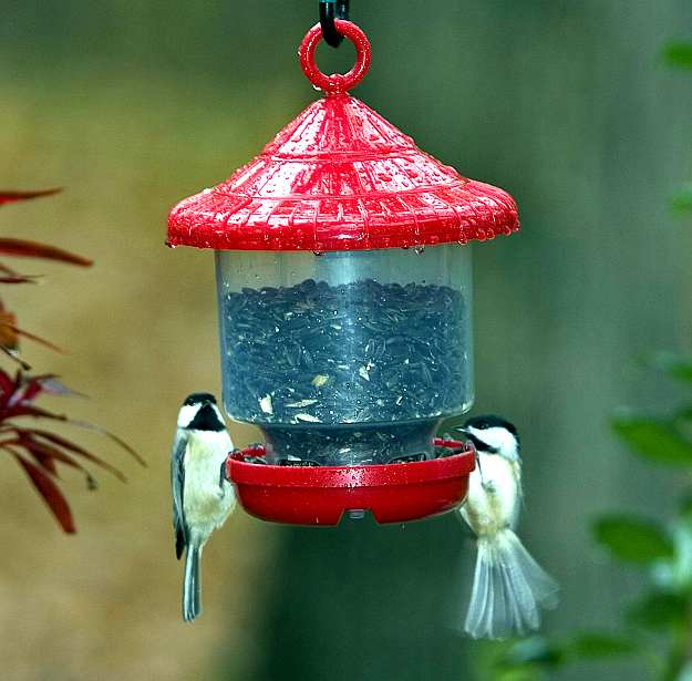Clingers Only Bird Feeder Twin Pack