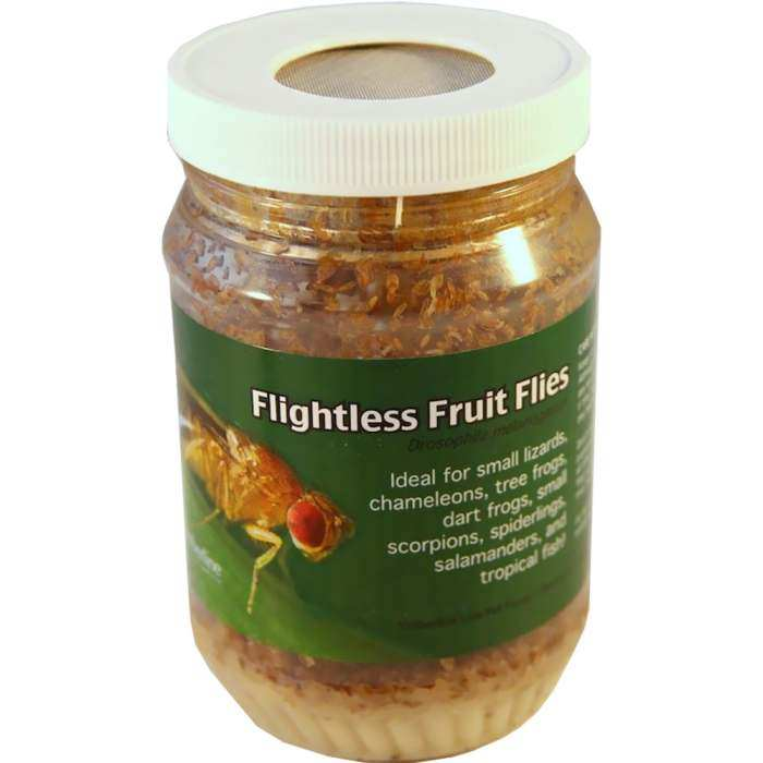 Flightless Fruit Flies - Adult Vial Tri-Pack