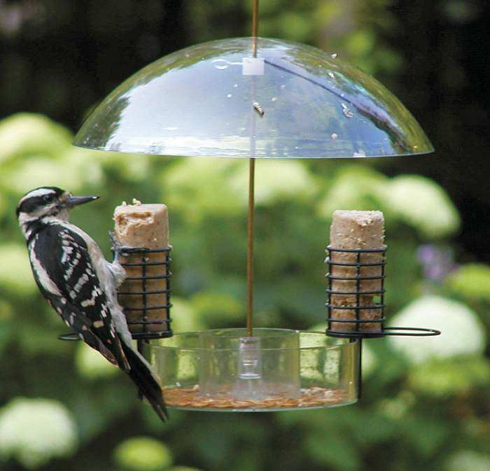 Supper Dome Seed, Suet, Mealworm Feeder