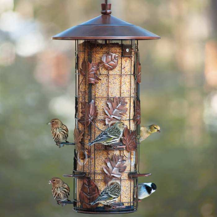 of squirrel photo lowes feeder bird mtmbilab x proof com