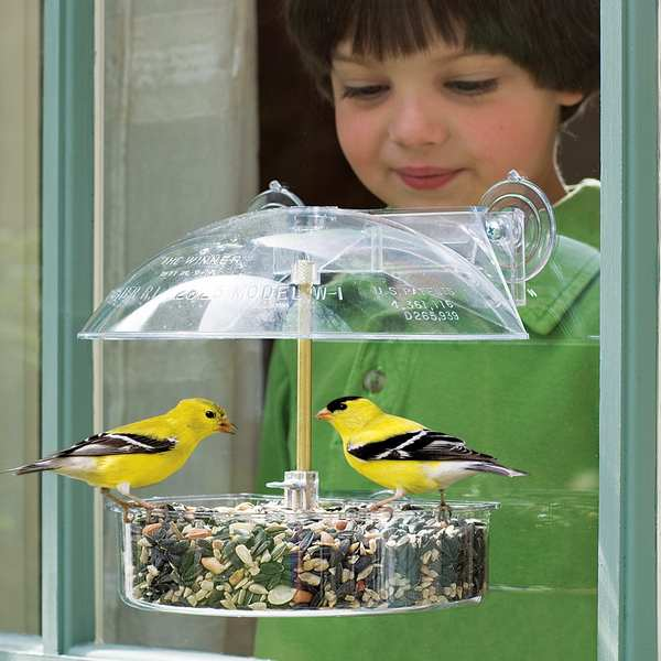 Droll Yankees Multi Purpose Window Feeder