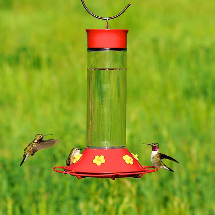 Best 30 Oz Hummingbird Feeder