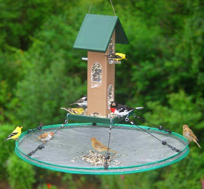 Seed Hoop Catcher Platform Feeder Bird For Feeders At Songbird Garden