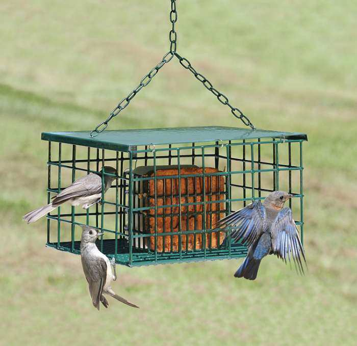 Songbird Suet Palace Squirrel Proof Suet Feeder