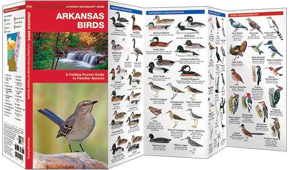 Amazon. Com: backyard birds of arkansas field guide art print: handmade.