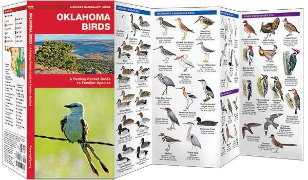 birds of oklahoma field guide oklahoma bird identification and