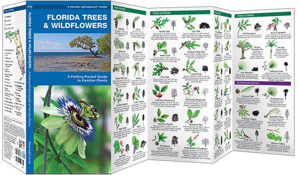 Florida Trees & Wildflowers Naturalist Guide