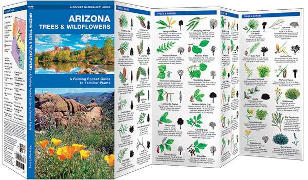 Arizona Trees & Wildflowers Naturalist Guide