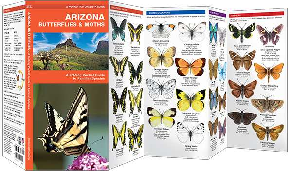 Arizona Butterflies & Moths Naturalist Guide