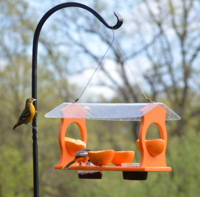 Recycled Plastic Oriole Diner Feeder
