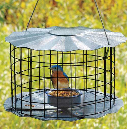 Barrier Guard Caged Bluebird Mealworm Feeder