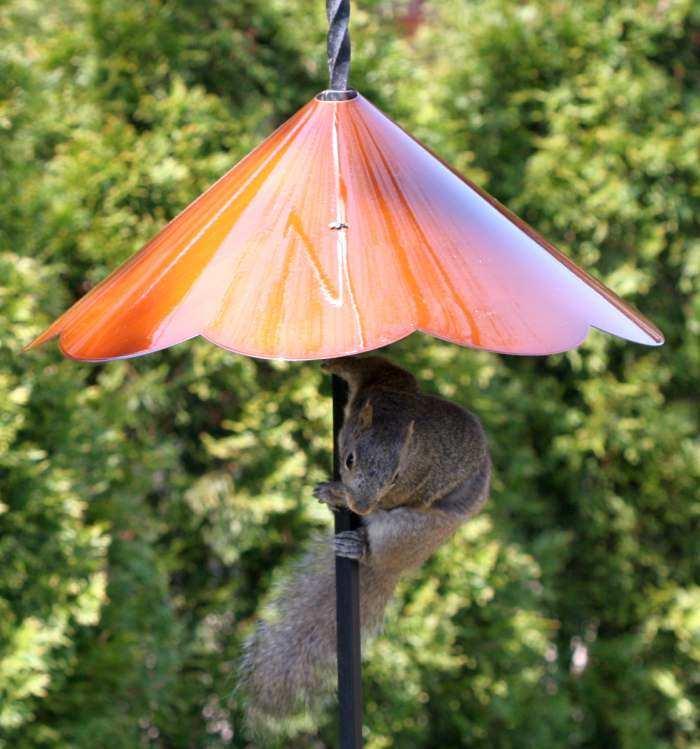 Pole Mount Wraparound Scalloped Squirrel Baffles Quality Pole Mount Wraparound Squirrel Baffles At Songbird Garden