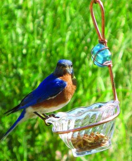 Copper Single Cup Bluebird Feeder Twin Pack