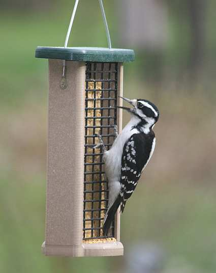 Second Nature Double Cake Suet Feeder