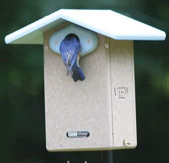 Second Nature Recycled Ultimate Bluebird House