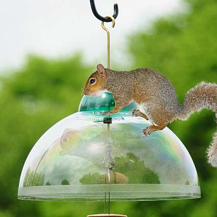 Droll Yankees Squirrel Guard Dome Green