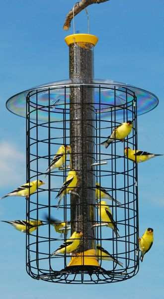 Droll Yankees Finch Flocker With Domed Cage Domed Caged Nyjer Thistle Bird Feeder At Songbird Garden